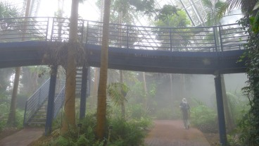 Raised and paved walkways through the Bicentennial Conservatory