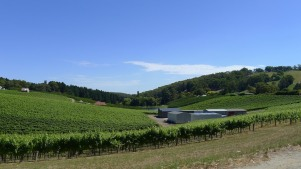 Mt Lofty scenic drive - Vines in the Adelaide Hills