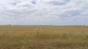 Now this is a wheat field!