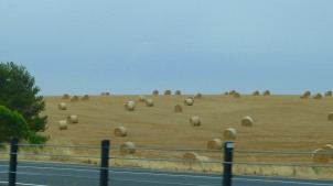 Lots of hay bales